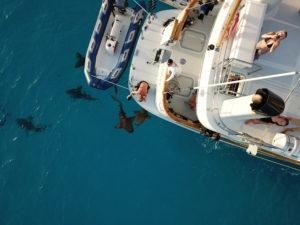 Photo of sharks circling