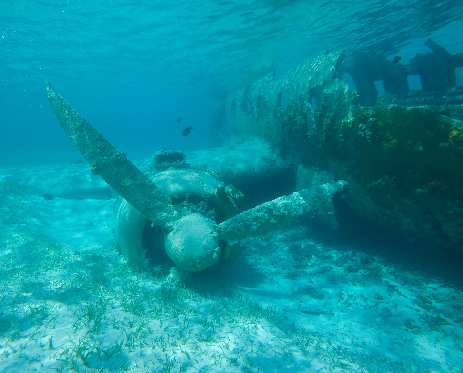 Photo of a downed drug-running plane